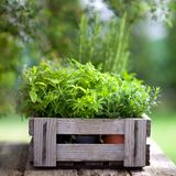 Fresh herbs. In a wooden box Stock Photo