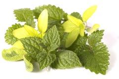 Fresh herbs stock photos