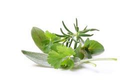 fresh herbs Στοκ εικόνα με δικαίωμα ελεύθερης χρήσης