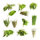 Fresh herbs. Collection of fresh herbs, isolated on white Stock Images