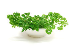 Fresh herbs. In a bowl on a white background royalty free stock photography