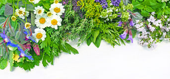 Fresh herbs. Assorted fresh herbs on white background with copy space Stock Images