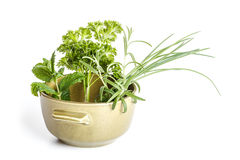 Herbs in bowl Stock Images