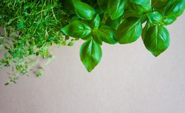 Fresh herbs background stock photography