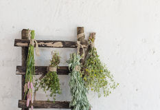 Fresh herbs on background old wall Stock Images