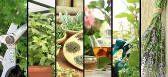 Fresh herbs on balcony garden Stock Image
