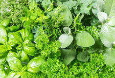 Fresh herbs basil, marjoram, parsley, rosemary, thyme, sage. Food ingredients Royalty Free Stock Photo