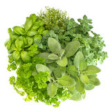 Fresh herbs basil, marjoram, parsley, rosemary, thyme, sage Royalty Free Stock Image
