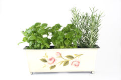 Fresh Herbs (basil, Parsley, Rosemary) Royalty Free Stock Images