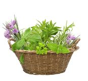 Fresh herbs in a basket. Isolated on white background stock photo