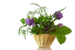Fresh herbs in the basket Royalty Free Stock Photos
