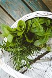 Fresh herbs in basket stock images