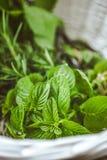 Fresh herbs in basket stock photos