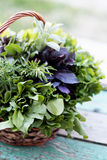 Fresh herbs in basket. Wicker basket with fresh herbs Stock Photos