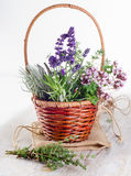 Fresh Herbs in basket on  a wooden table. Stock Photography