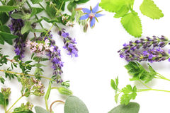 Fresh herbs border Royalty Free Stock Photos