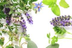 Fresh herbs border. Fresh aromatic herbs border comosition royalty free stock photos