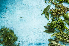 Fresh herbs border background, from above. Lay flat on pastel blue table Stock Image