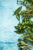 Fresh herbs border background, from above. Lay flat on pastel blue table Royalty Free Stock Images