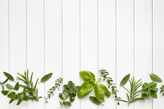 Fresh Herbs Border. Over white timber panel background Stock Photography
