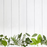 Fresh Herbs Border Stock Photos