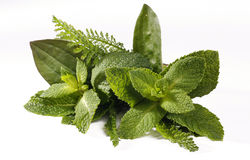 Fresh herbs bouquet Stock Image