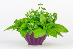 Fresh herbs in a bowl Royalty Free Stock Images
