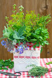 Fresh herbs in box Stock Photography