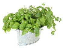 Fresh herbs in buckets Stock Photo