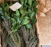 Fresh herbs. A bunch of bay leaf and thyme. Royalty Free Stock Photos