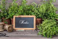 Fresh herbs with chalkboard and vintage tools. Food ingredients Royalty Free Stock Images
