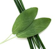 Fresh Herbs--Chives and Sage Stock Photography