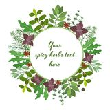 Fresh herbs circular frame Royalty Free Stock Images