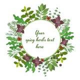 Fresh herbs circular frame Royalty Free Stock Images