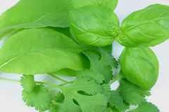 Fresh Herbs Closeup Stock Images