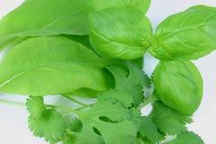 Fresh Herbs Closeup stock images