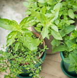 Fresh herbs closeup Royalty Free Stock Photography