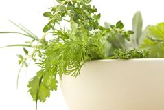 Fresh Herbs Closeup Rframe stock photos