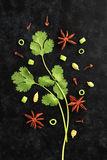 Fresh Herbs Coriander Leaves with Anise on Black Background Stock Photos