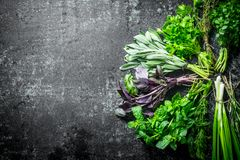 Fresh herbs cut in the home garden. On dark rustic background stock image