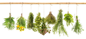 Fresh herbs dill, basil, rosemary, thyme, oregano, marjoram, dan Stock Photography