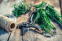 Fresh herbs before drying Royalty Free Stock Photo