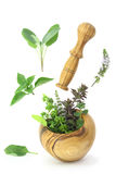 Fresh herbs Stock Photography