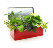 Fresh herbs in first aid kit. Fresh herbs in a red box stock photography