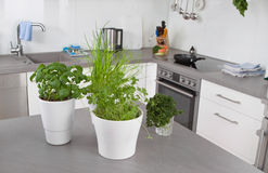 Fresh herbs in flower pots in kitchen Stock Photos