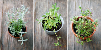 Fresh herbs in flower pots on wooden table Stock Image