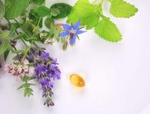 Fresh aromatic herbs Stock Photo
