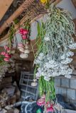 Fresh herbs hanging. Fresh herbs and flowers hanging in old room, chamomile stock photos