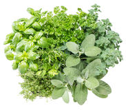 Fresh herbs. Food ingredients. Basil, parsley, rosemary, sage. Fresh herbs isolated on white background. Food ingredients. Basil, marjoram, parsley, rosemary stock images