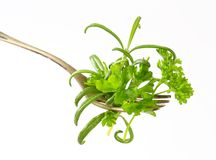 Fresh herbs on fork Royalty Free Stock Photo
